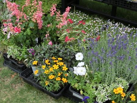 2013年6月6日寄せ植え予定の花