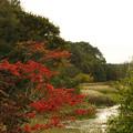美々沼の紅葉