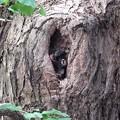 Photos: 巣穴発見