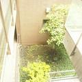 ガーデン渋谷氷川~庭3