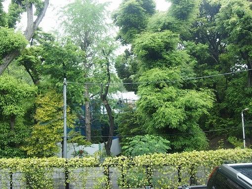 ガーデン渋谷氷川~眺望