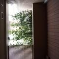 六本木プラシッド~マスターベッドバスからバルコニーの眺め