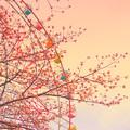 Photos: 遊園地の桜