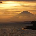 Photos: 夕焼けの富士山とトビ!120909