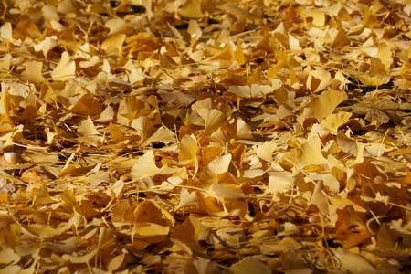 ジュータンになった落ち葉もふわふわ!201211