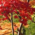 Photos: 真赤な紅葉が鮮やか!2012