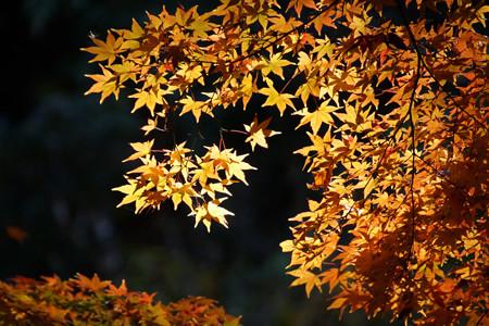 黄葉が輝く!2012