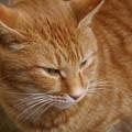 Photos: 猫大好き!2012