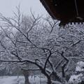 Photos: 雪宿り本堂前!2013