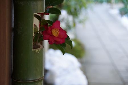 竹の花瓶の椿!201301