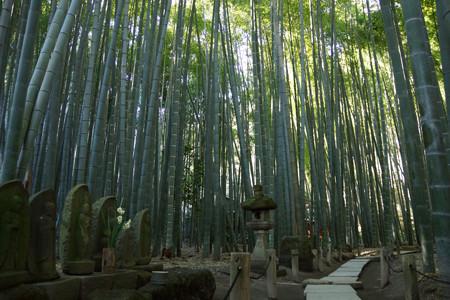 木漏れ日の竹の寺!201301