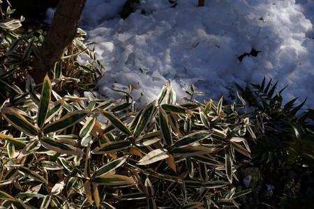 竹林の残雪!201301
