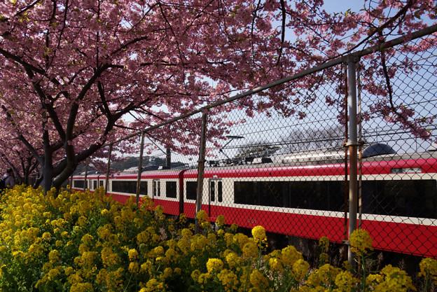 菜の花と赤い電車!130309