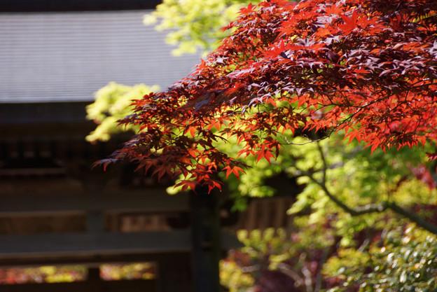 Photos: 新緑と紅葉!130427