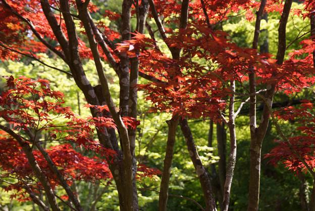 新緑と紅葉風景!130427