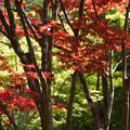 写真: 新緑と紅葉風景!130427