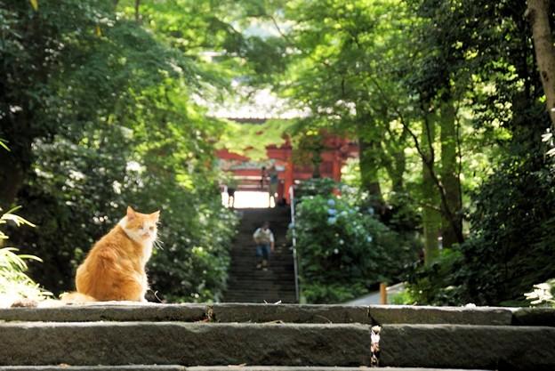妙本寺参道の猫!130629
