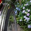 Photos: 紫陽花と人力車!130629
