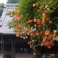 Photos: 祖師堂と朱色のノウゼンカズラ!130715