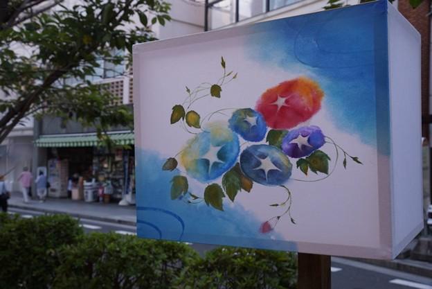 写真: ぼんぼり朝顔!130807