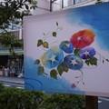 Photos: ぼんぼり朝顔!130807