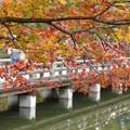 写真: 紅葉と橋131109-535