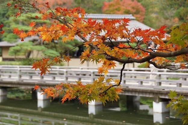 写真: 葉と日本庭園131109-523