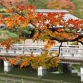 Photos: 葉と日本庭園131109-523