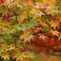 写真: 紅葉と黄葉131109-437
