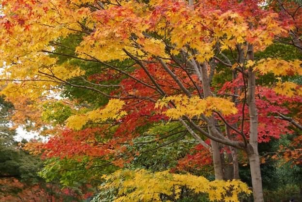 紅葉と黄葉131109-471