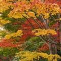 写真: 紅葉と黄葉131109-471