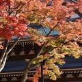 写真: 仏殿と紅葉131123-316