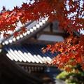 写真: 円覚寺黄葉31123-133