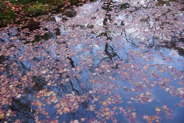 写真: 圓光寺モミジの映り込み!131201