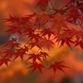 写真: 永観堂の紅葉!131201