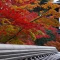 写真: 永観堂の紅葉2!131201