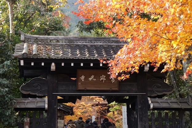 写真: 常寂光寺の黄葉!131202