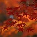 写真: 紅葉4!131201