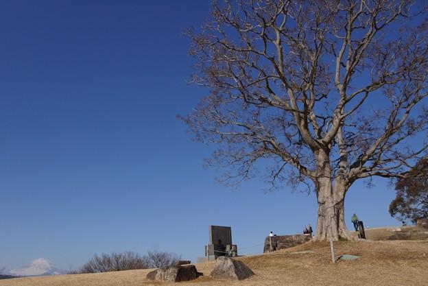 写真: えの木と富士山!140102