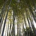 写真: 天に伸びる竹林!140118
