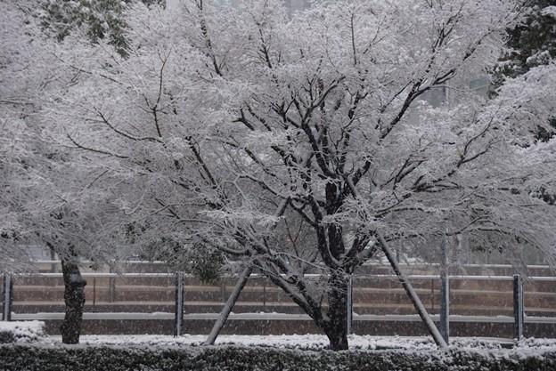 雪の樹!20140214