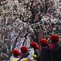 写真: 枝垂れ梅と六地蔵!140222