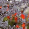 Photos: 桜まつり上野!140328