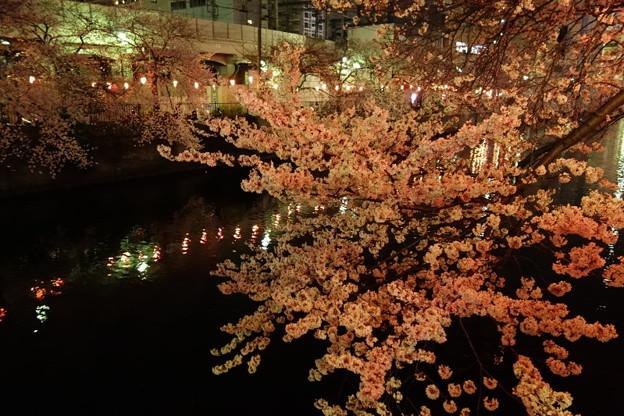 川沿いの夜桜!