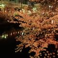 Photos: 川沿いの夜桜!