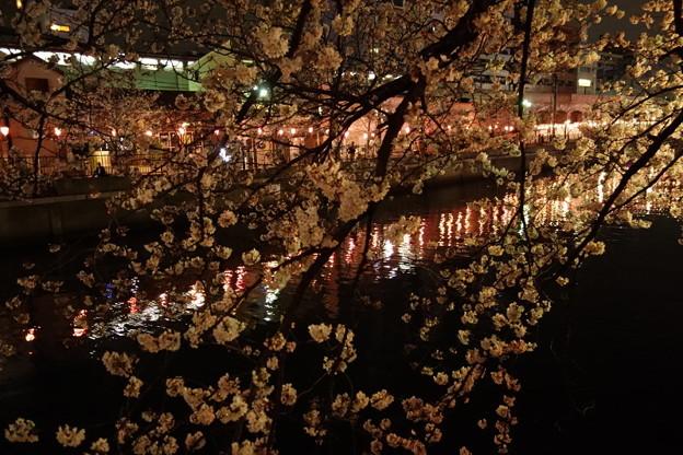 夜桜と川!