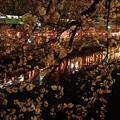 Photos: 夜桜と川!