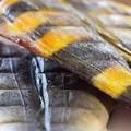 Photos: ホッケの干物たち