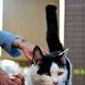 写真: 谷中夕焼けだんだんの猫