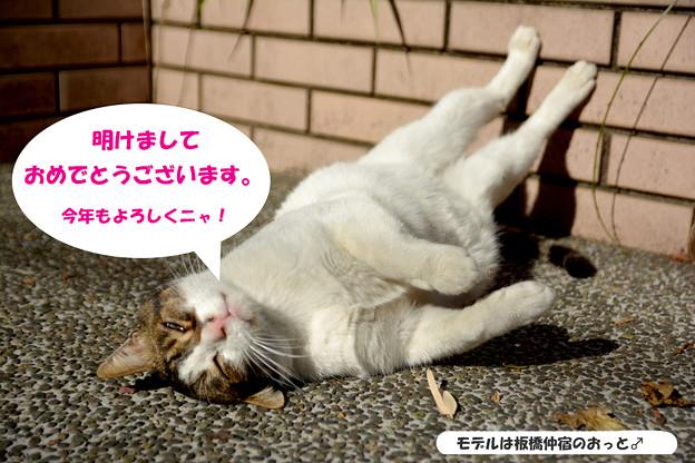 Photos: 今年もよろしくにゃん!